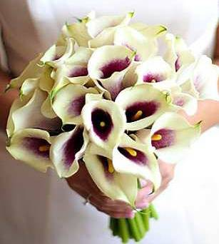 Calla Lily Bouquet