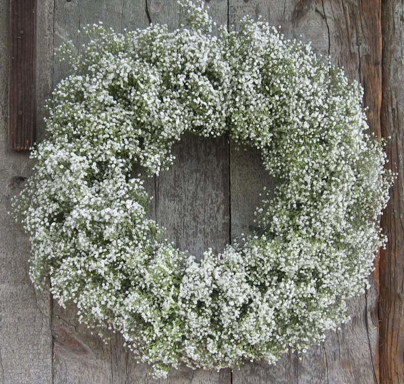 Stunning Babys Breath: Its More than Just Filler