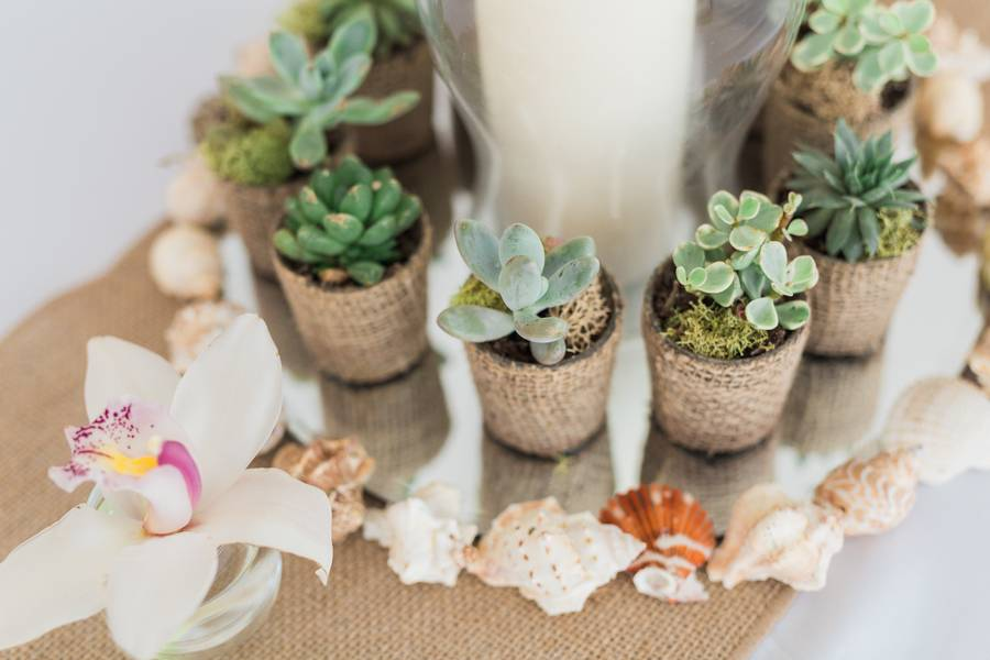 Succulents and Sea Shells