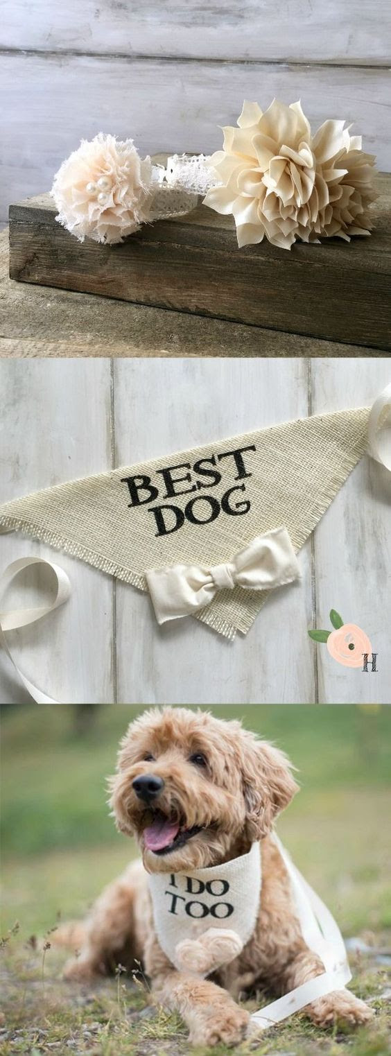 What Will Your Dog Wear On The Big Day?